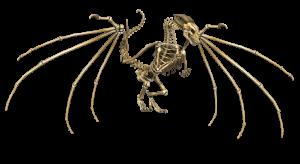 dragon-1957809