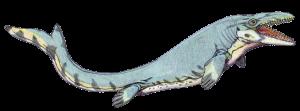 Mosasaurus_beaugei1DB