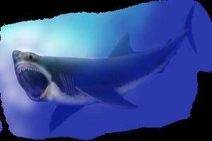 Carcharodon_megalodon_SI